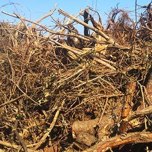 Baustellenabfälle [gemischt] - Was darf nicht hinein: biogener Abfall