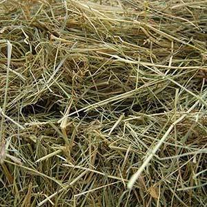 Grünschnitt - Was darf hinein: kleine Mengen Heu