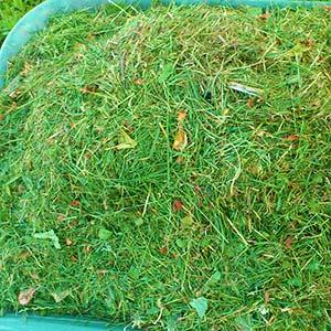 Grünschnitt - Was darf nicht hinein: Mähgut / reiner Grasschnitt
